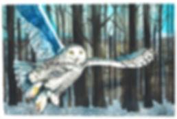 Snowy OWL watercolor.jpg