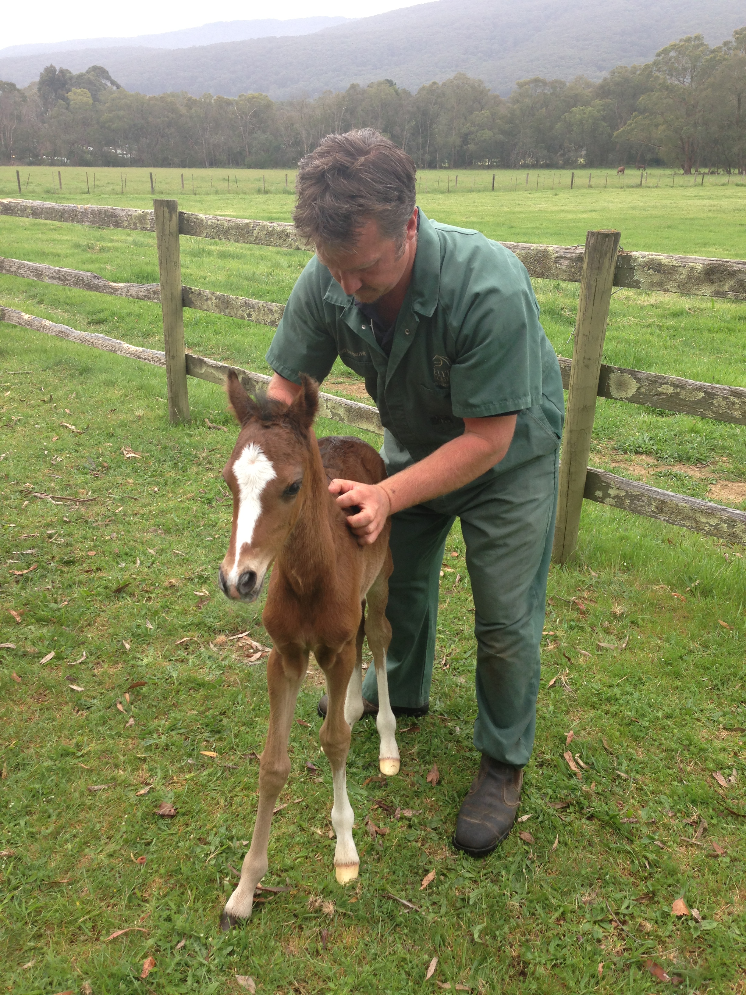 Foal examinations