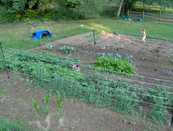 Garden 2012