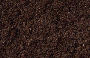 Humus / Compost