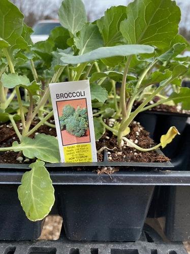 Broccoli Flat