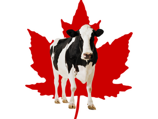 Canadian Dairy Supply Management System Would Bring Stability to Dairy Industry