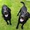 Thumbnail: Cosy Companions Pet Shampoo Bar