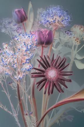 florilegium 073