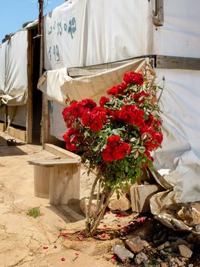 rose zaatari jordan, avril 2018