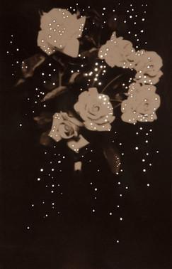 mom's roses1914