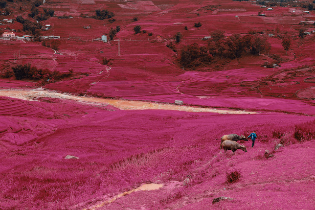 vietnamese dreamscapes - highlands