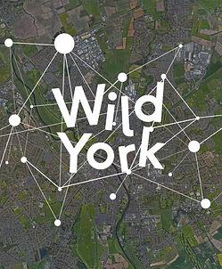 wild-york-image-1024x727.jpg