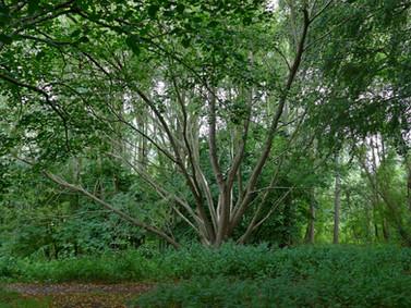 Fishponds Wood 12Aug19 Phil Neath 04.JPG