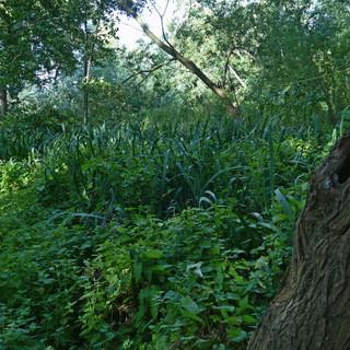 Fishponds Wood