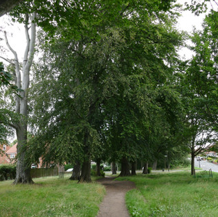 Beech Grove