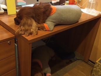 机が一つ、占領されてしまった!