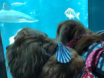 犬生初の水族館