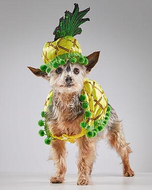animal-care-society-celebrity-pet-maggie
