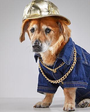 animal-care-society-celebrity-pet-wally.