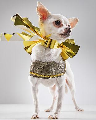 animal-care-society-celebrity-pet-cedric