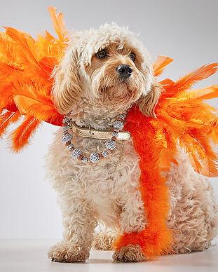 animal-care-society-celebrity-pet-lilah.