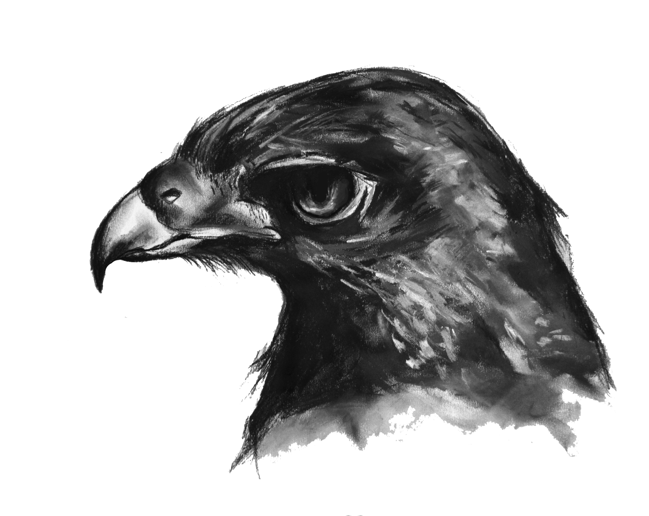 Eagle Illustration