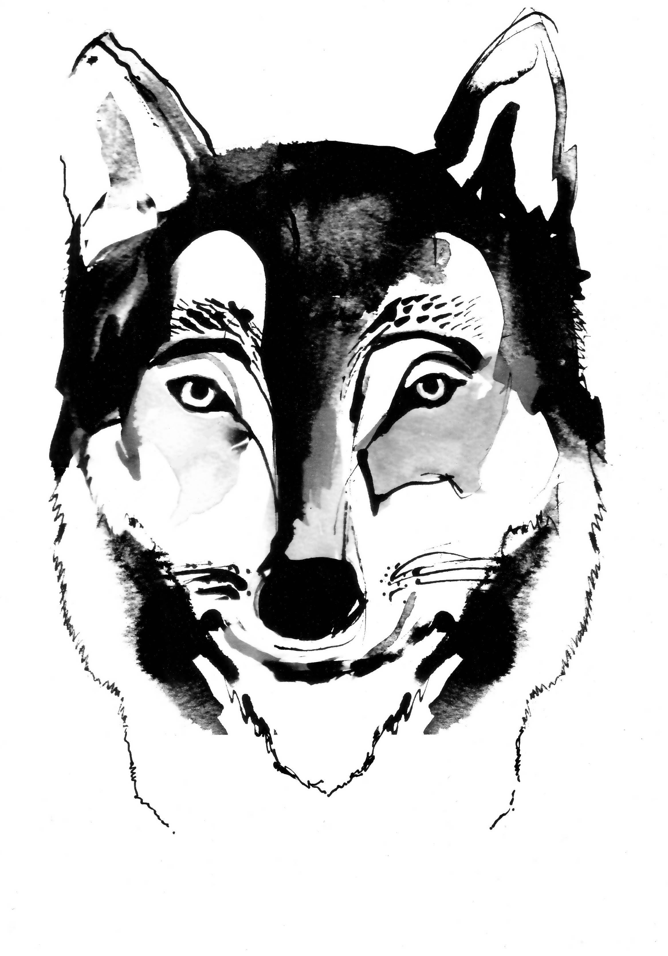 Wolf Ink Drawing