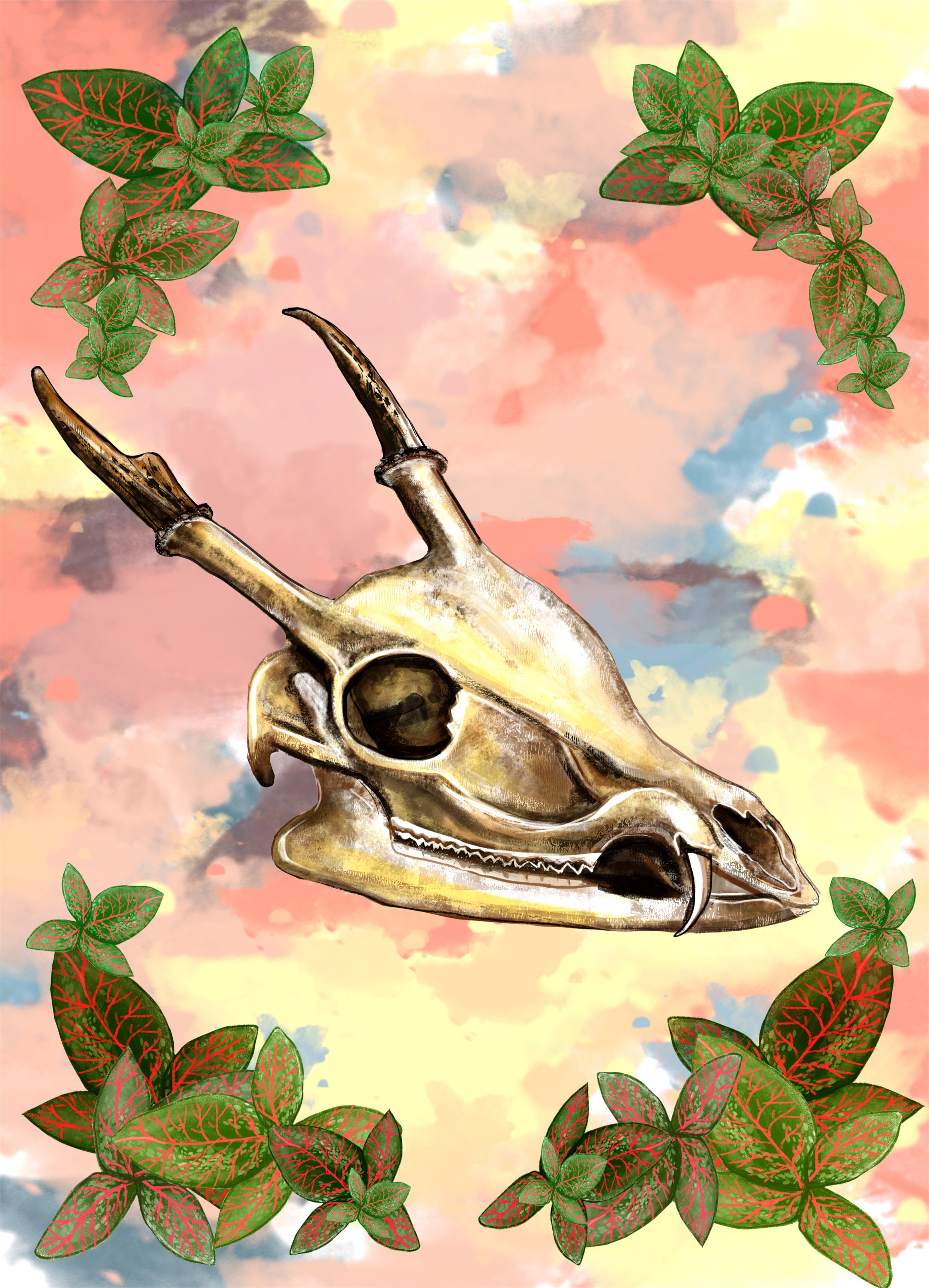 Muntjac Skull Design