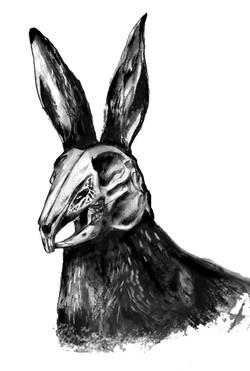 Skeletal Hare