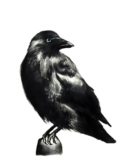 Rook Drawing