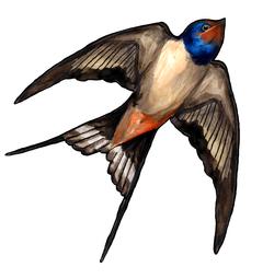 Swallow sticker2