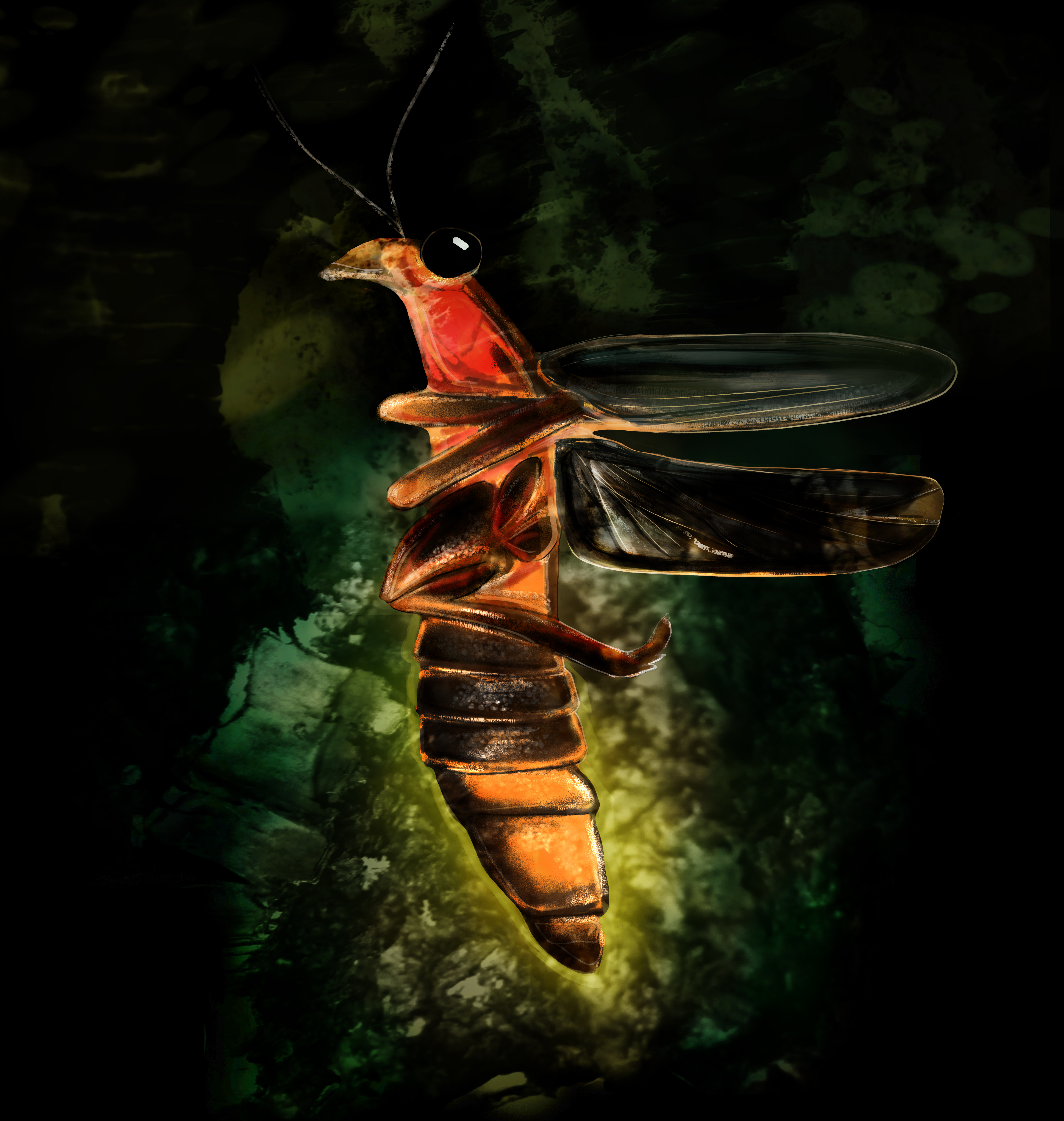 Firefly Illustration