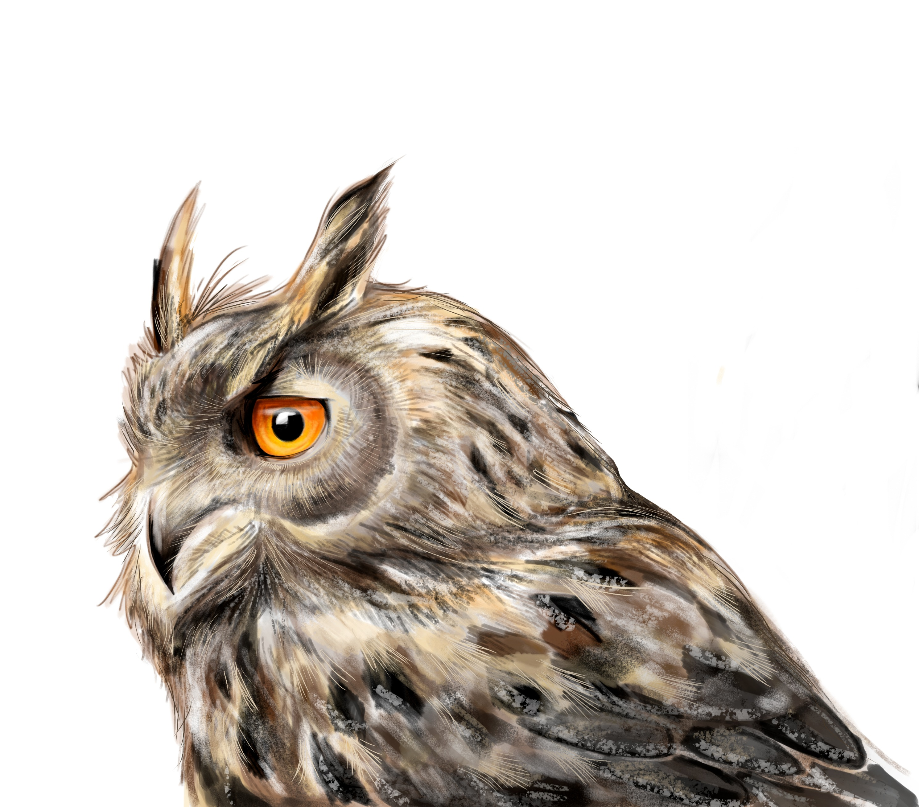 Owl - Digital Drawing