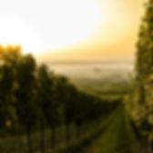 Coucher de soleil sur le vignoble
