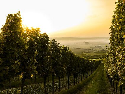 Sonnenuntergang über Weinberg