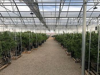 Hemp Farm_kiwami_organic.JPG