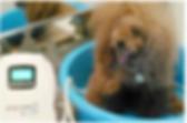 スクリーンショット 2020-06-04 15.57.10.png