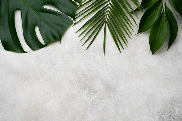 flat-lay-of-monstera-and-other-leaves.jp