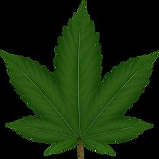 cannabisindica.png