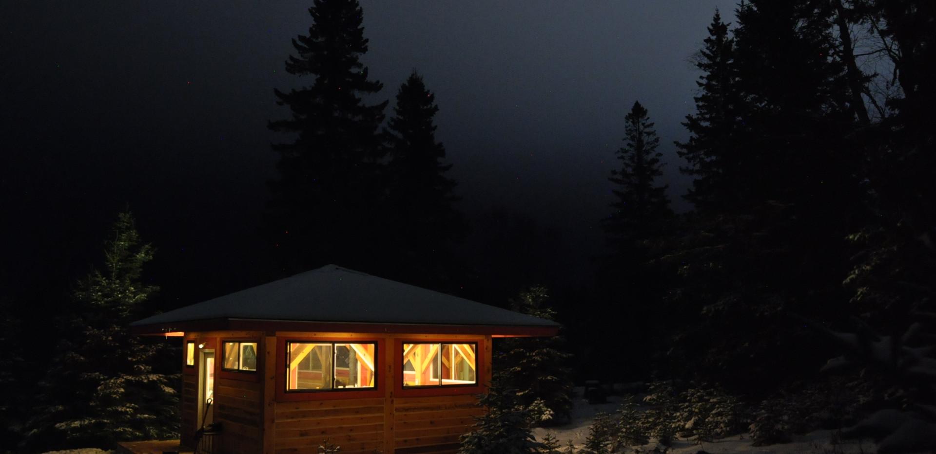 Firefly by night