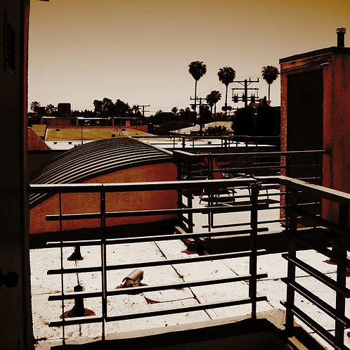 #eyeknowphoto, LA rooftop, photography, canvas art, palm trees
