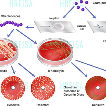 Hemolysis Test