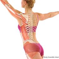 Muscle Chain