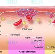 Fibrinolysis and blood coagulation