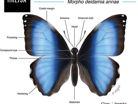 Butterfly Renderings