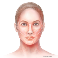 Facial Anatomy for Injections