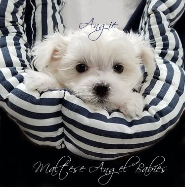 Angie Litter Picture