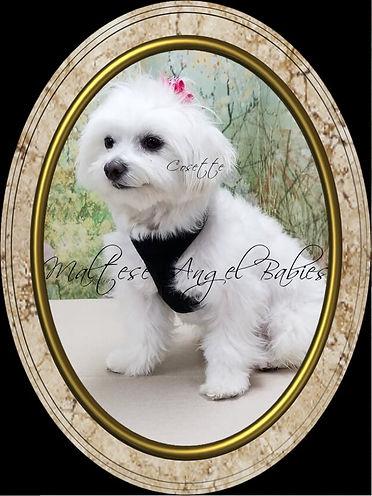 Cosette-Portrait98.jpg