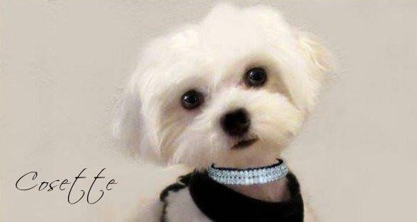 Cosette (Cozy)