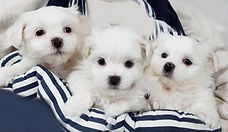 Lilas 2nd litter 7-24-2019.jpg