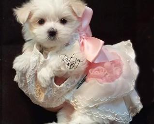 Ritzy (Daddy is Au'nji)