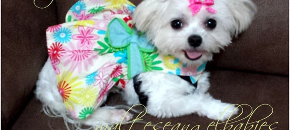 Zoey - Retired