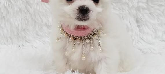 Chanel's Litter