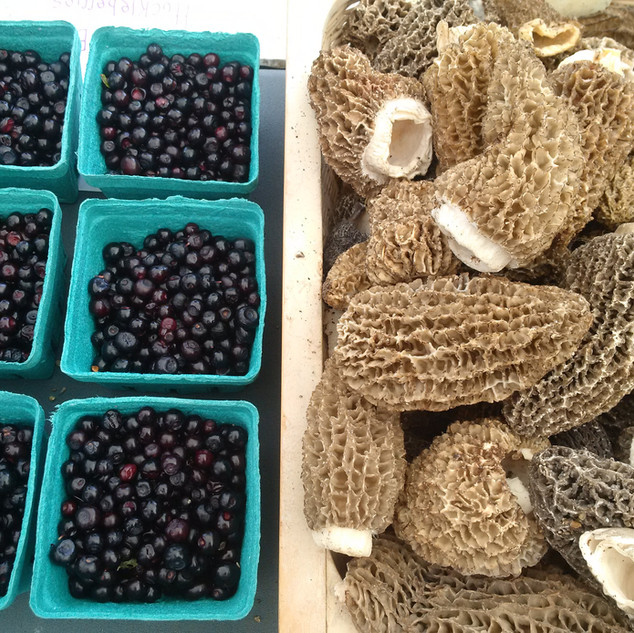 Black huckleberries and Morels